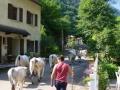 Transhumance Pyreneeën