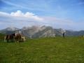De paarden lopen in de zomer los in de bergen