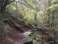 Wandelen in de bossen van de Pyreneeën