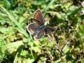 Vlinders in de Pyreneeën