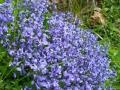 Bloemen en Planten in de Pyreneeën