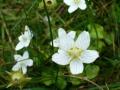 flora_26