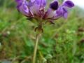 flora_35