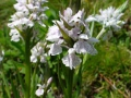 flora_9