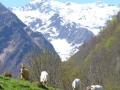 Geiten in de bergen