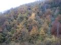 Beboste bergen in de Pyreneeën