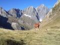 Paarden rond Port d'Aula, Pyreneeën